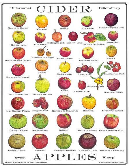 Cider Apples Poster by Eric Lewandowski